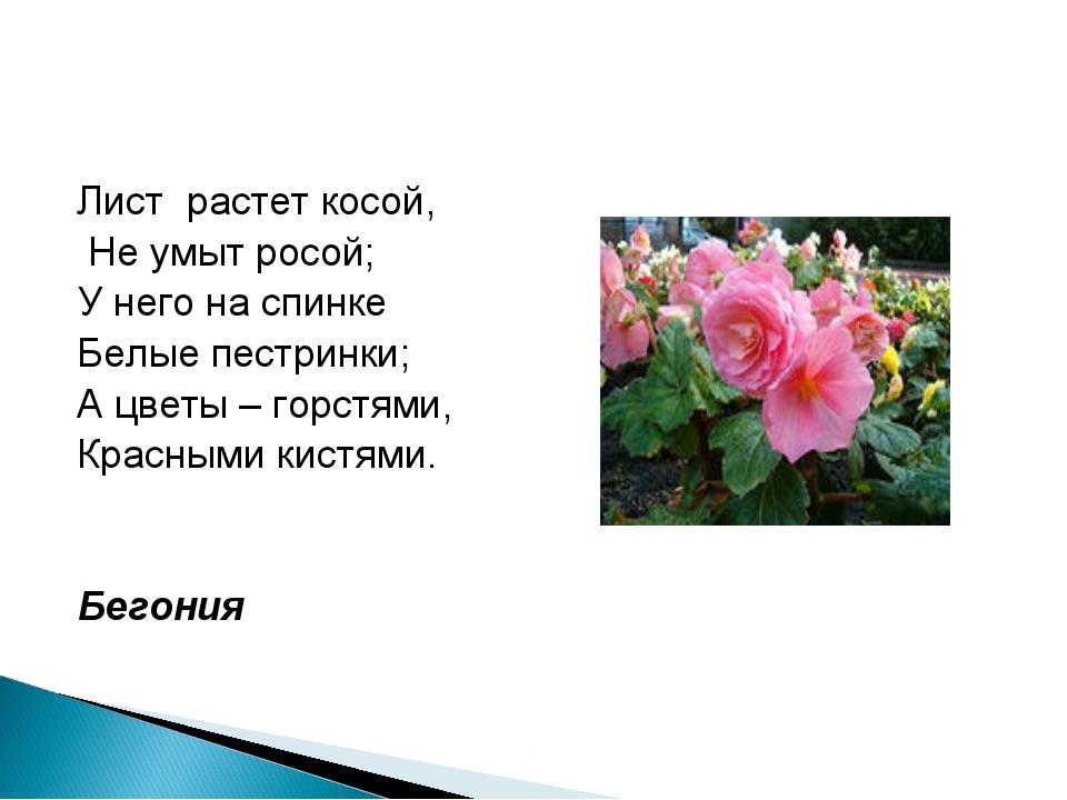 Лист растет косой, Не умыт росой; У него на спинке Белые пестринки; А цветы –...