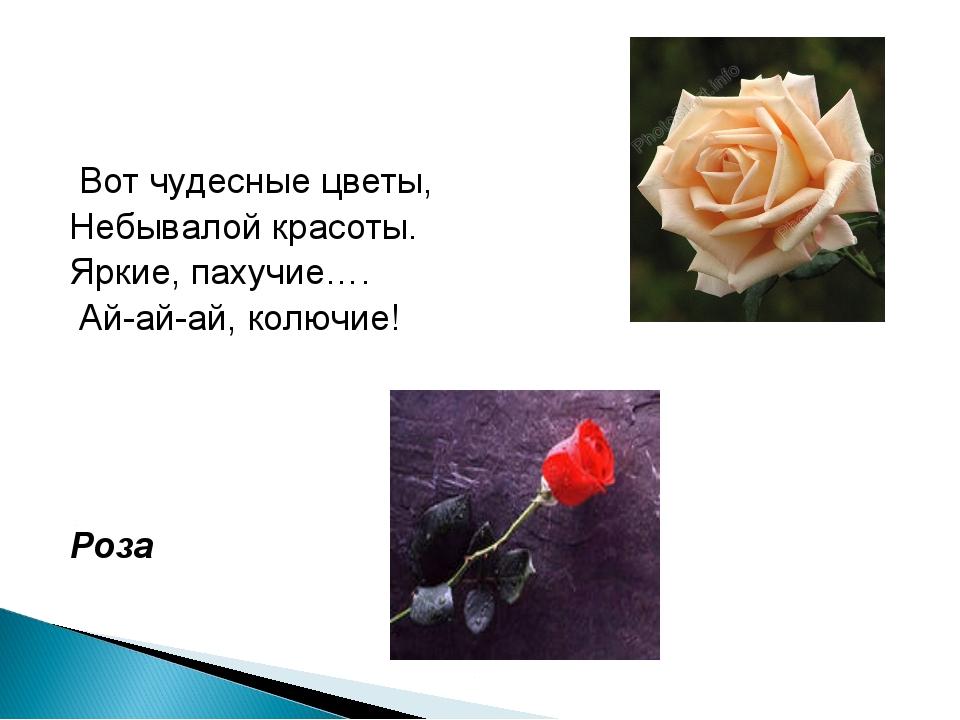 Вот чудесные цветы, Небывалой красоты. Яркие, пахучие…. Ай-ай-aй, колючие! Р...