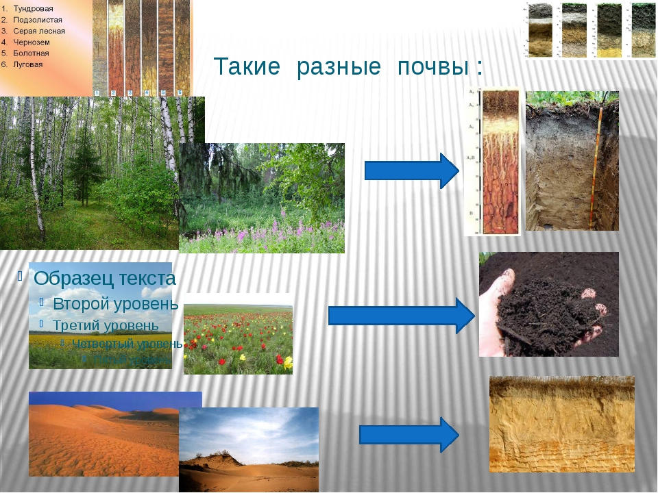 Такие разные почвы :