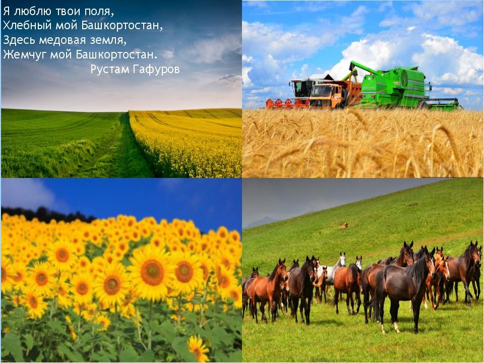 . Я люблю твои поля, Хлебный мой Башкортостан, Здесь медовая земля, Жемчуг мо...