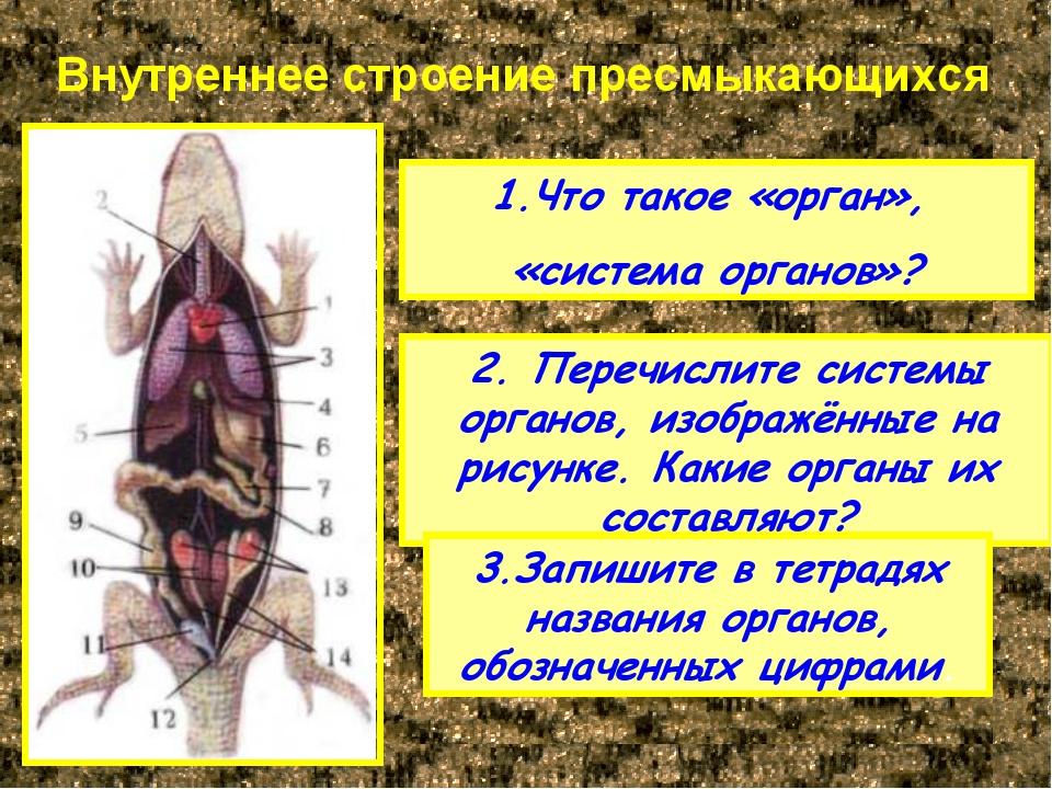 Внутреннее строение пресмыкающихся Что такое «орган», «система органов»? 2. П...