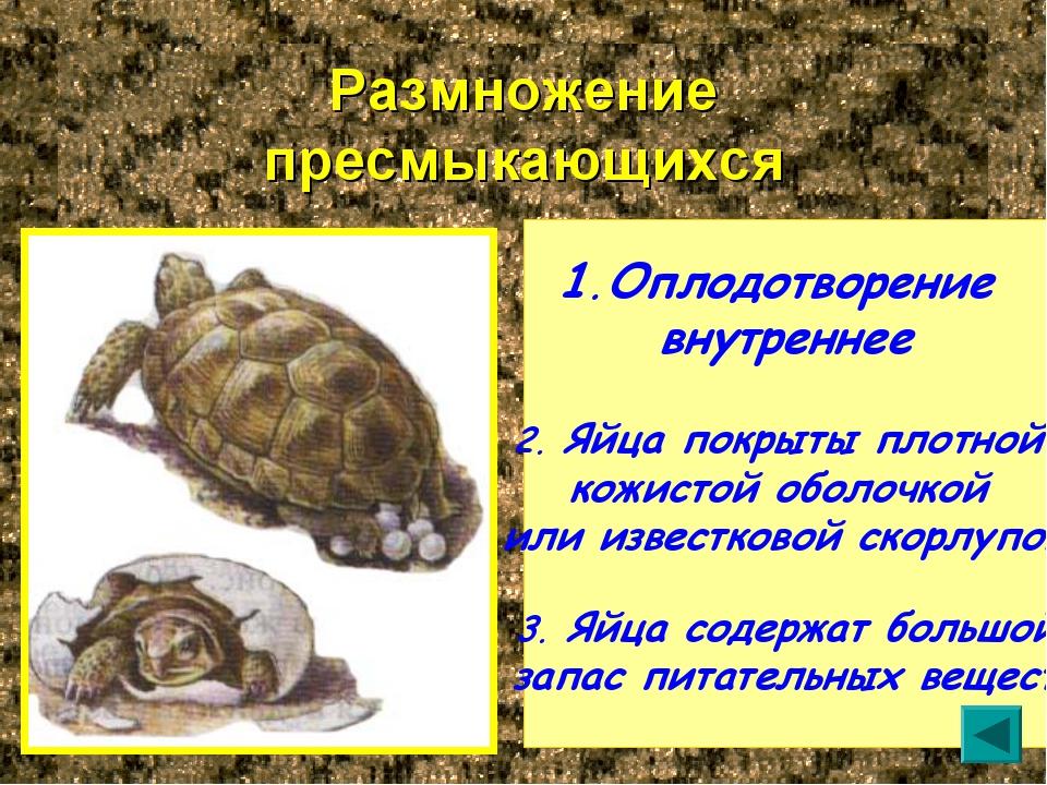 Размножение пресмыкающихся Оплодотворение внутреннее 2. Яйца покрыты плотной...