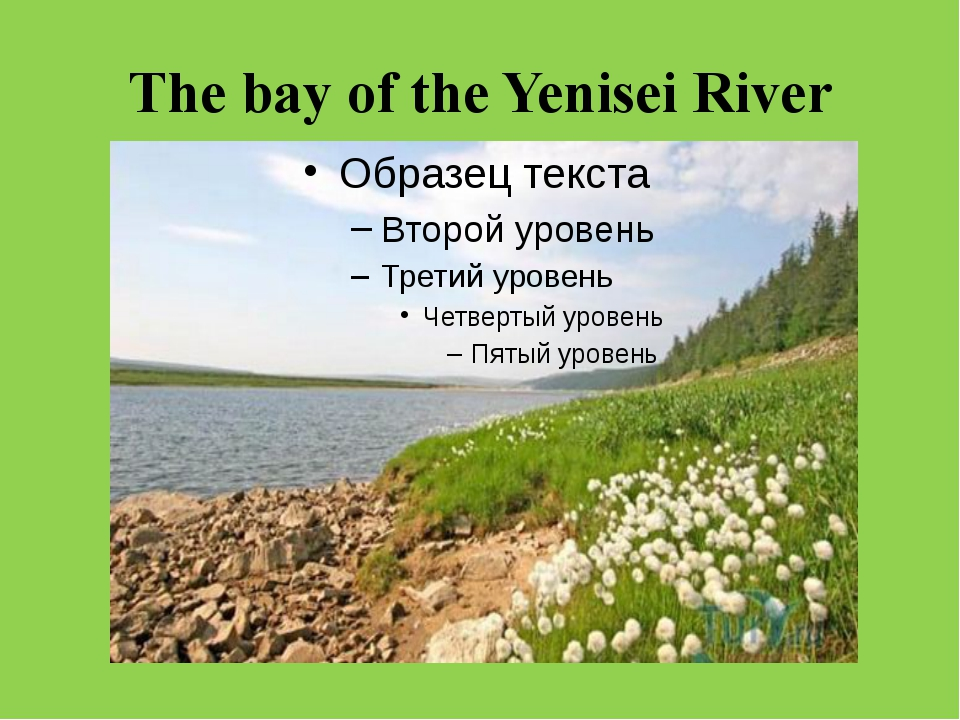 The bay of the Yenisei River
