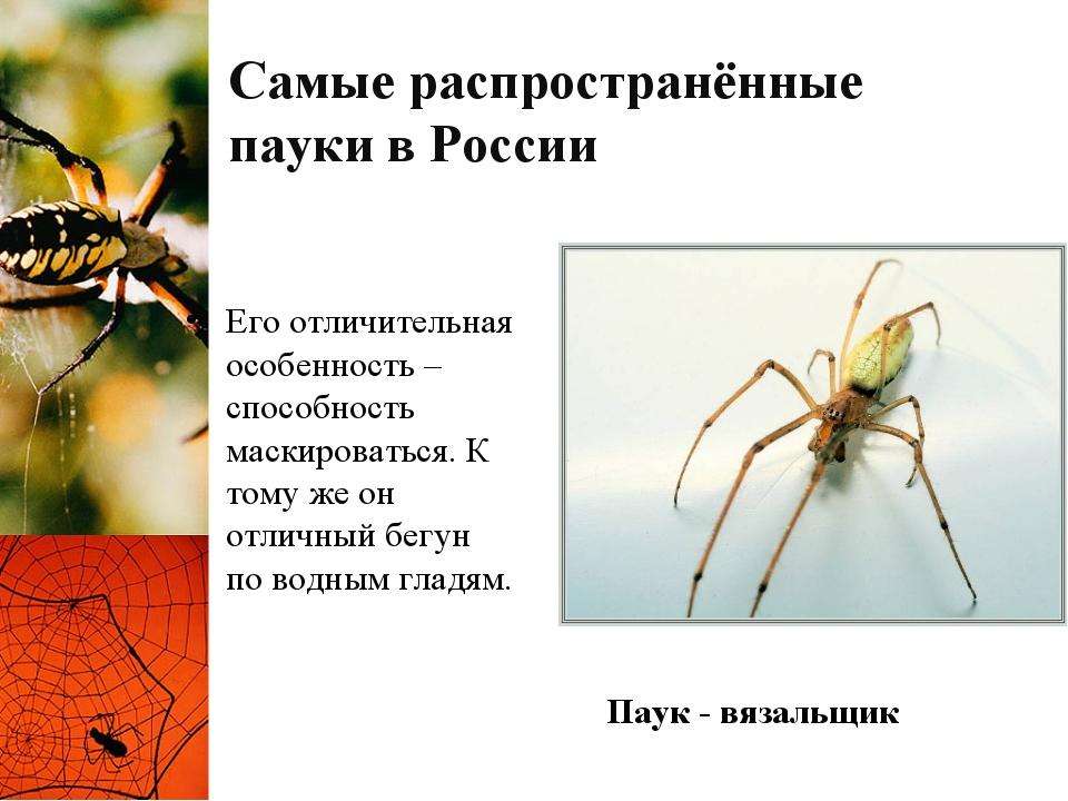Самые распространённые пауки в России Его отличительная особенность – способн...