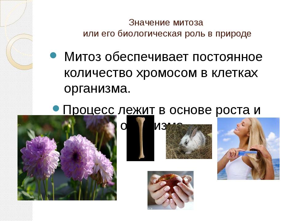 Значение митоза или его биологическая роль в природе Митоз обеспечивает посто...
