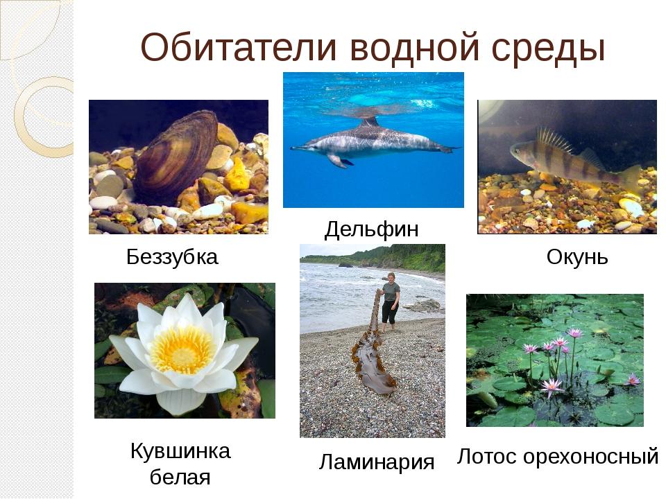 Обитатели водной среды Беззубка Дельфин Окунь Кувшинка белая Лотос орехоносны...