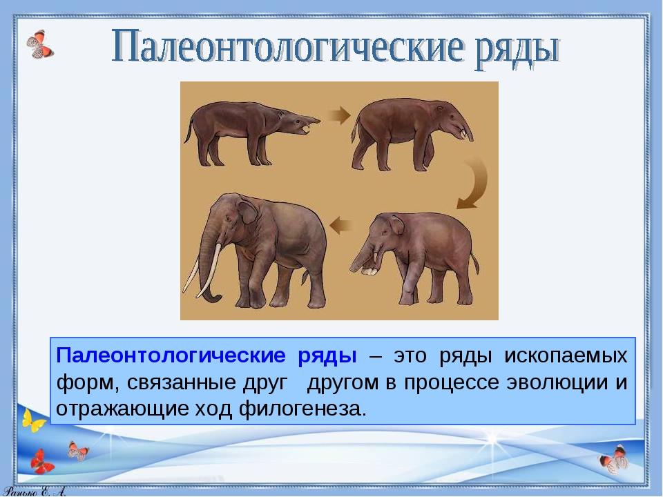Палеонтологические ряды – это ряды ископаемых форм, связанные друг другом в п...