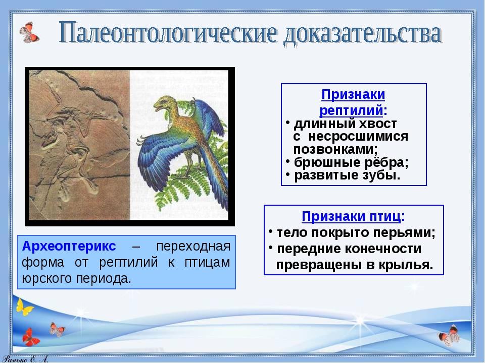 Археоптерикс – переходная форма от рептилий к птицам юрского периода. Признак...