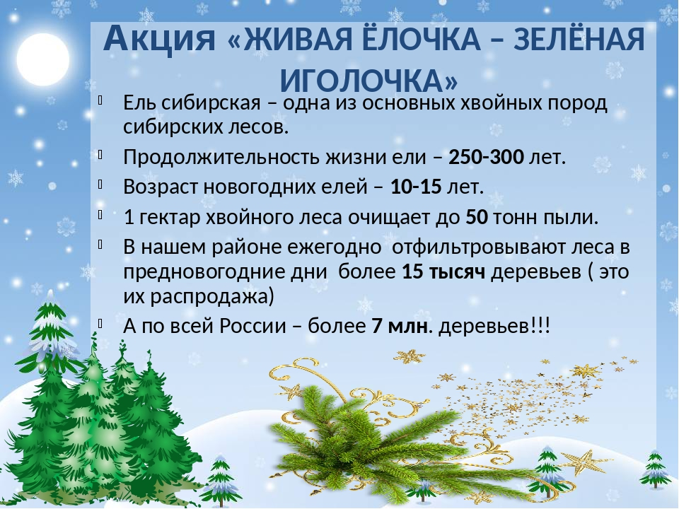 Акция «ЖИВАЯ ЁЛОЧКА – ЗЕЛЁНАЯ ИГОЛОЧКА» Ель сибирская – одна из основных хвой...