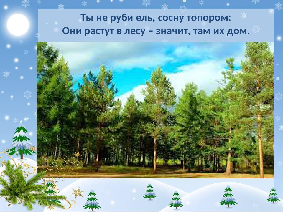 Ты не руби ель, сосну топором: Они растут в лесу – значит, там их дом.