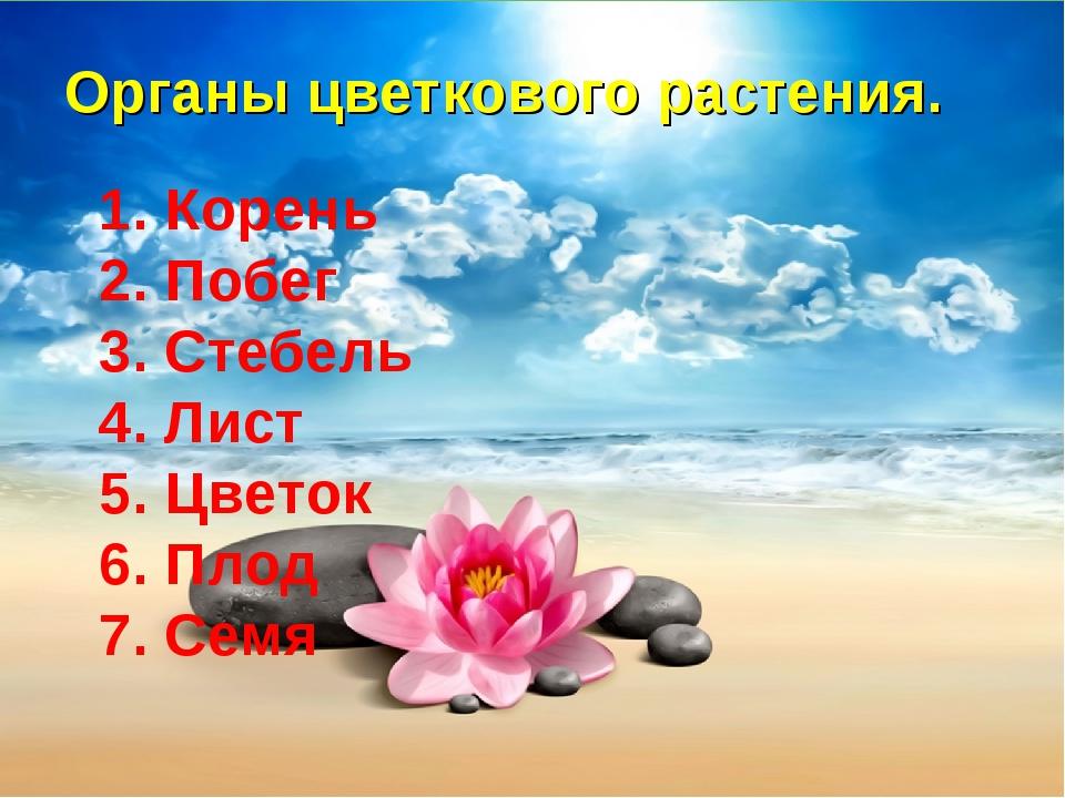 Органы цветкового растения. 1. Корень 2. Побег 3. Стебель 4. Лист 5. Цветок 6...