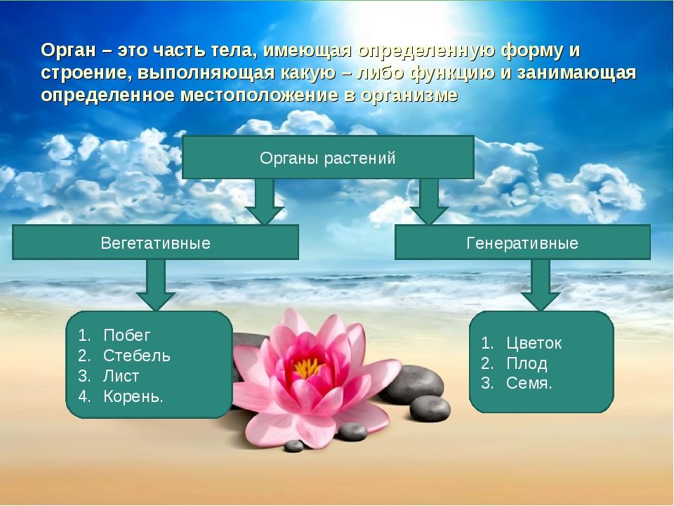 Орган – это часть тела, имеющая определенную форму и строение, выполняющая ка...