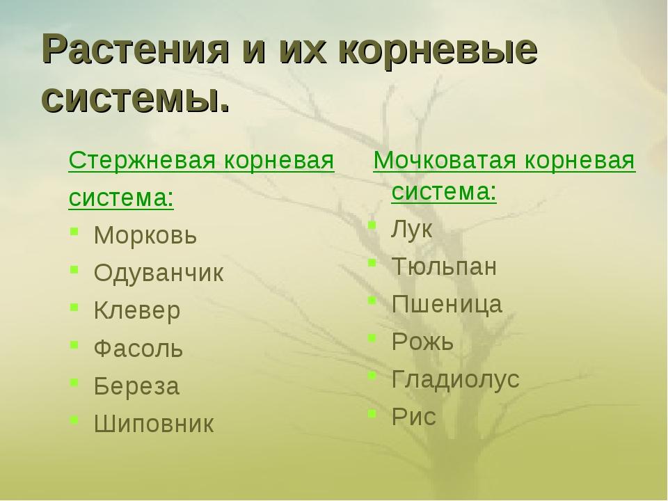 Растения и их корневые системы. Стержневая корневая система: Морковь Одуванчи...