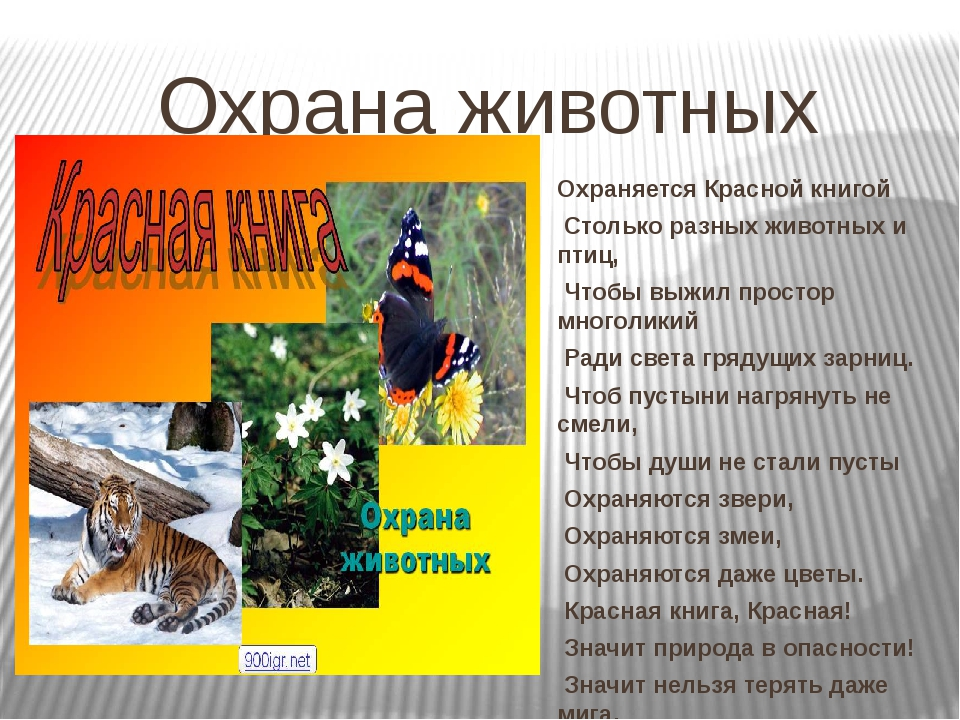 Охрана животных Охраняется Красной книгой Столько разных животных и птиц, Что...