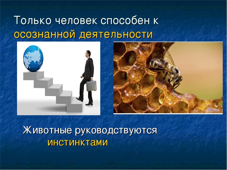 Только человек способен к осознанной деятельности Животные руководствуются ин...