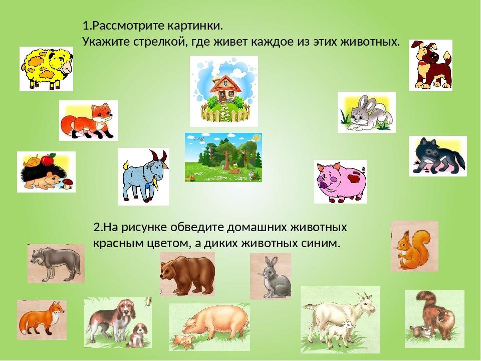 * 1.Рассмотрите картинки. Укажите стрелкой, где живет каждое из этих животных...