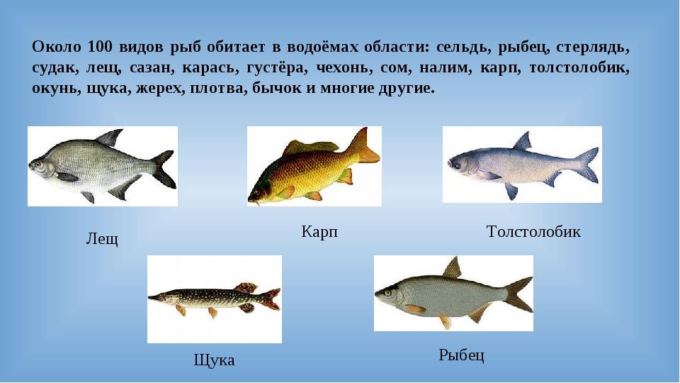 Около 100 видов рыб обитает в водоёмах области: сельдь, рыбец, стерлядь, суда...