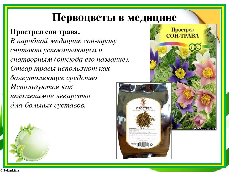 Первоцветы в медицине Прострел сон трава. В народной медицине сон-траву счита...