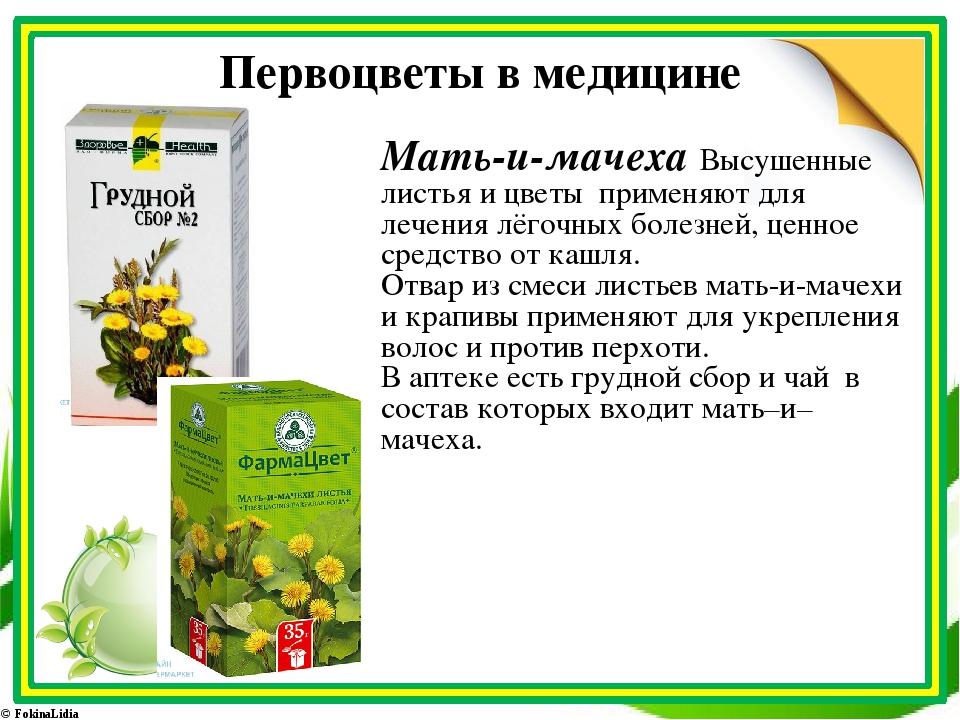Первоцветы в медицине Мать-и-мачеха Высушенные листья и цветы применяют для л...