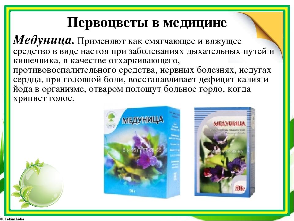 Первоцветы в медицине Медуница. Применяют как смягчающее и вяжущее средство в...