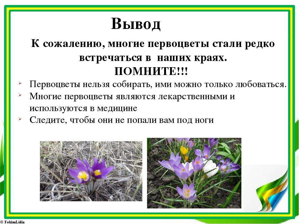 Вывод К сожалению, многие первоцветы стали редко встречаться в наших краях. П...