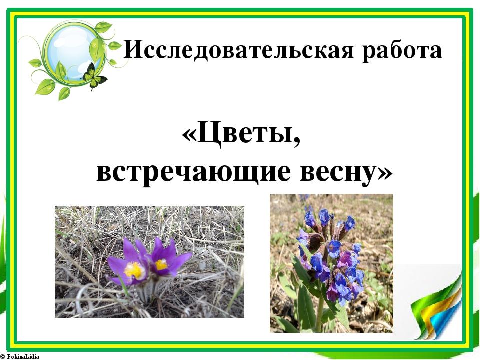 Исследовательская работа «Цветы, встречающие весну» © FokinaLidia