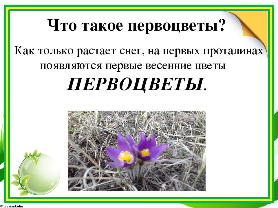 Что такое первоцветы? Как только растает снег, на первых проталинах появляютс...