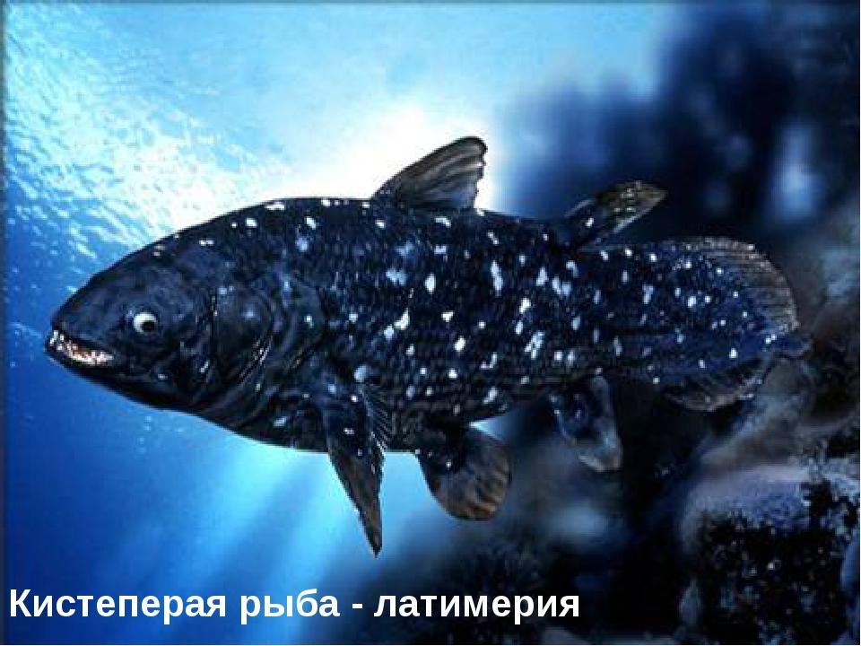 Кистеперая рыба - латимерия