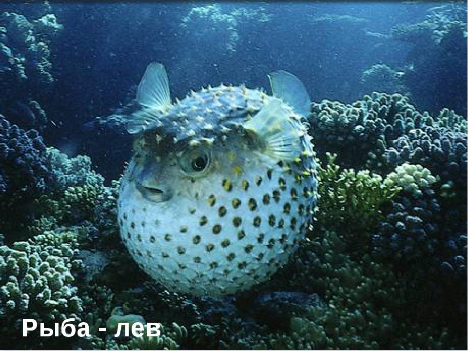 Рыба - лев