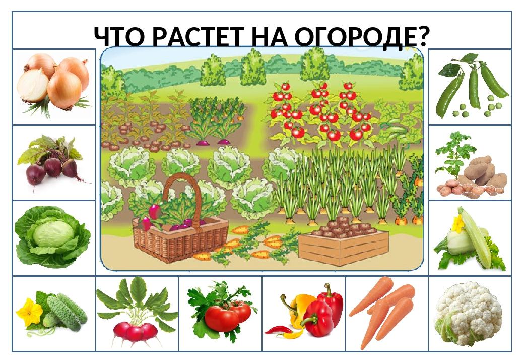 Овощи на огороде картинка для детей, дверь замком сергей