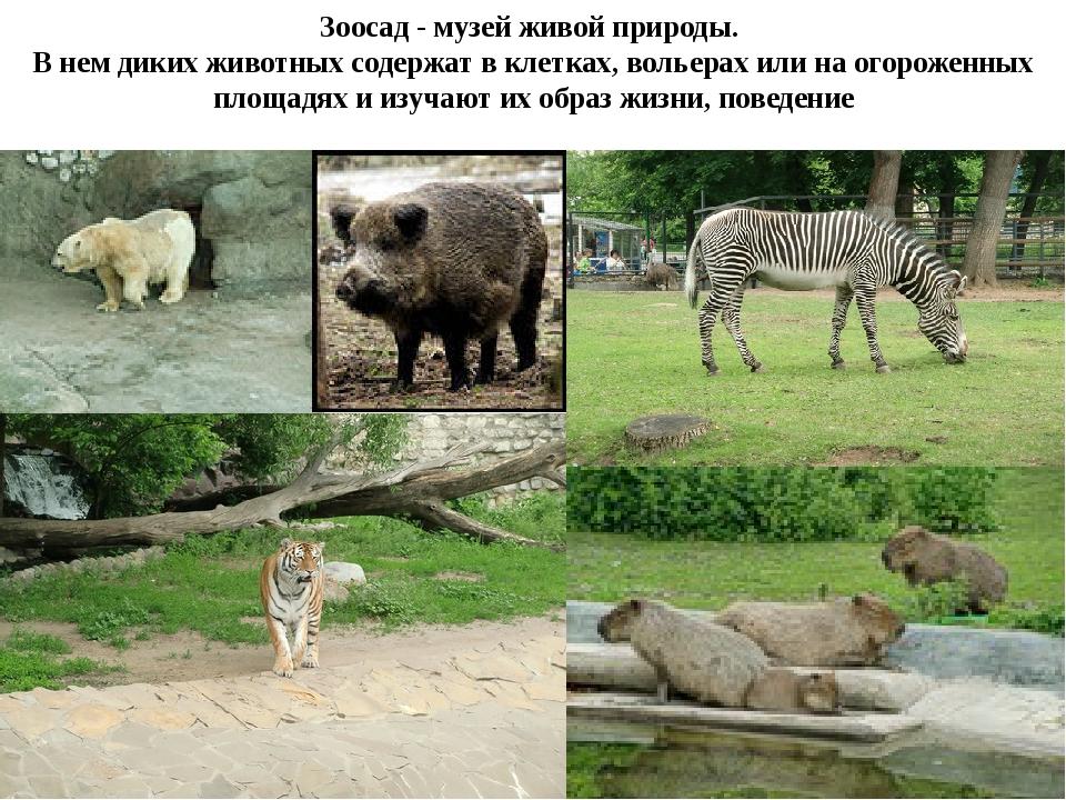 Зоосад - музей живой природы. В нем диких животных содержат в клетках, вольер...