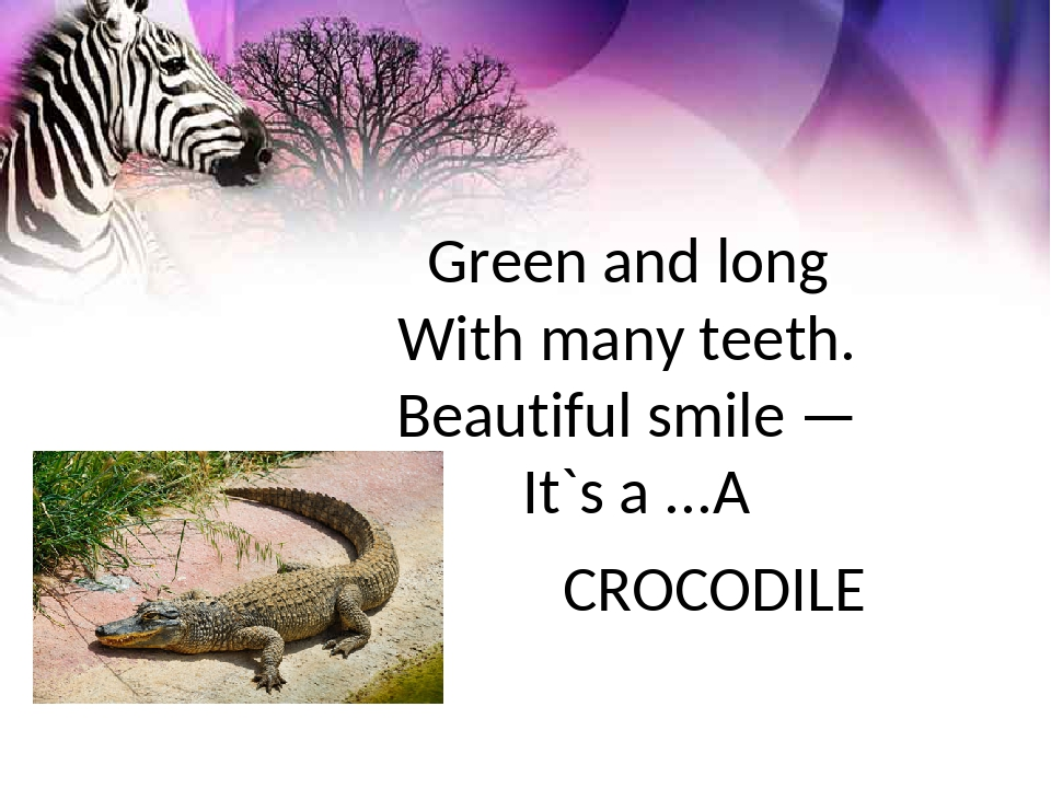 Green and long With many teeth. Beautiful smile — It`s a ... CROCODILE