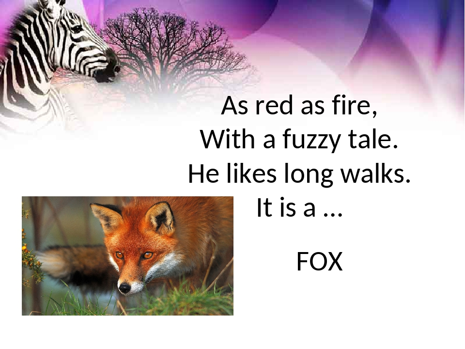 As red as fire, With a fuzzy tale. He likes long walks. It is a … FOX