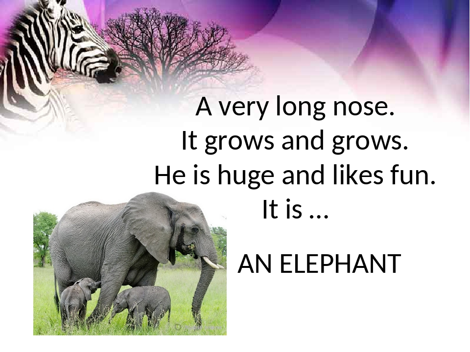 A very long nose. It grows and grows. Не is huge and likes fun. It is … AN EL...
