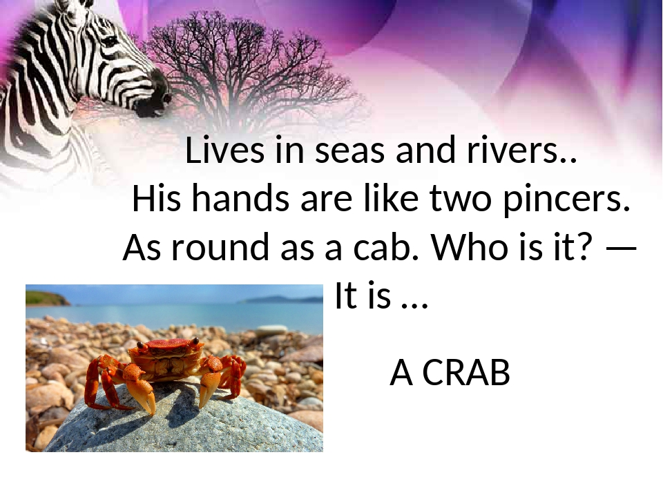 Lives in seas and rivers.. His hands are like two pincers. As round as a cab....