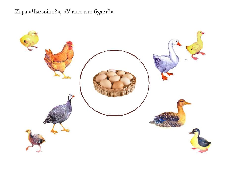 картинки для игры домашние птицы при