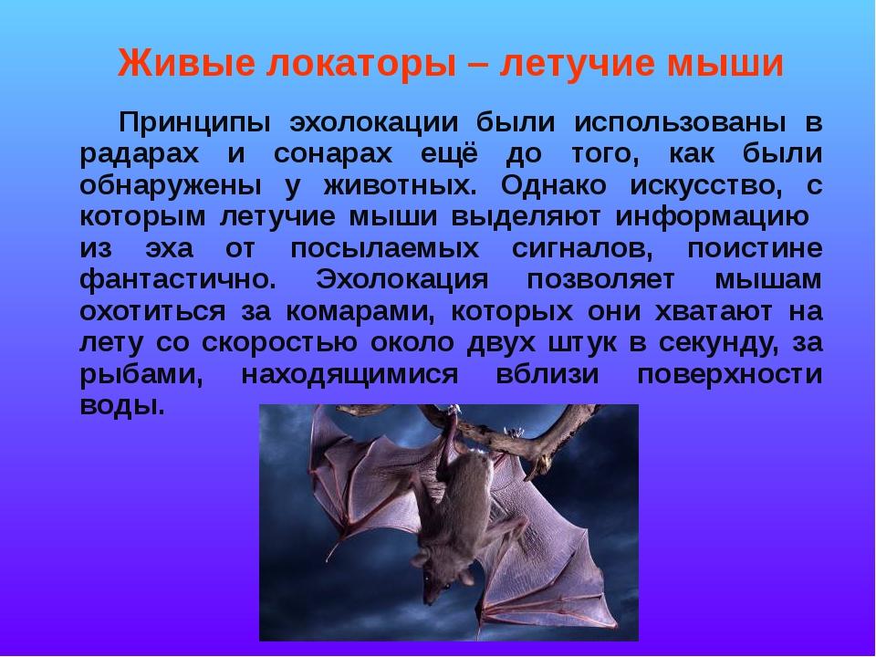 Принципы эхолокации были использованы в радарах и сонарах ещё до того, как б...