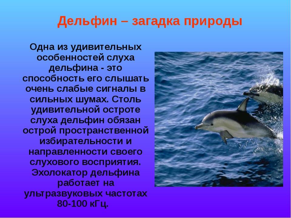 Одна из удивительных особенностей слуха дельфина - это способность его слыша...