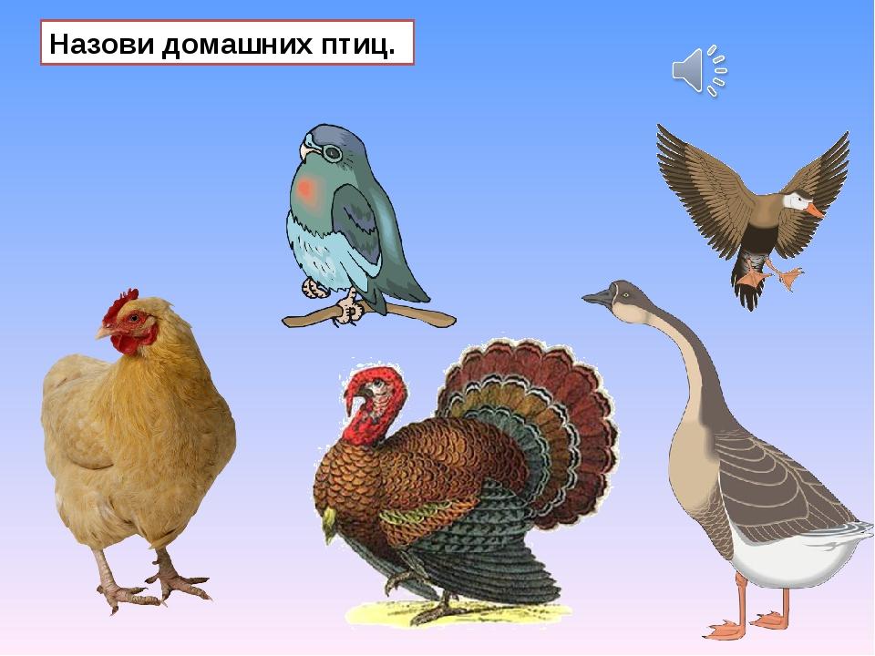 Назови домашних птиц.