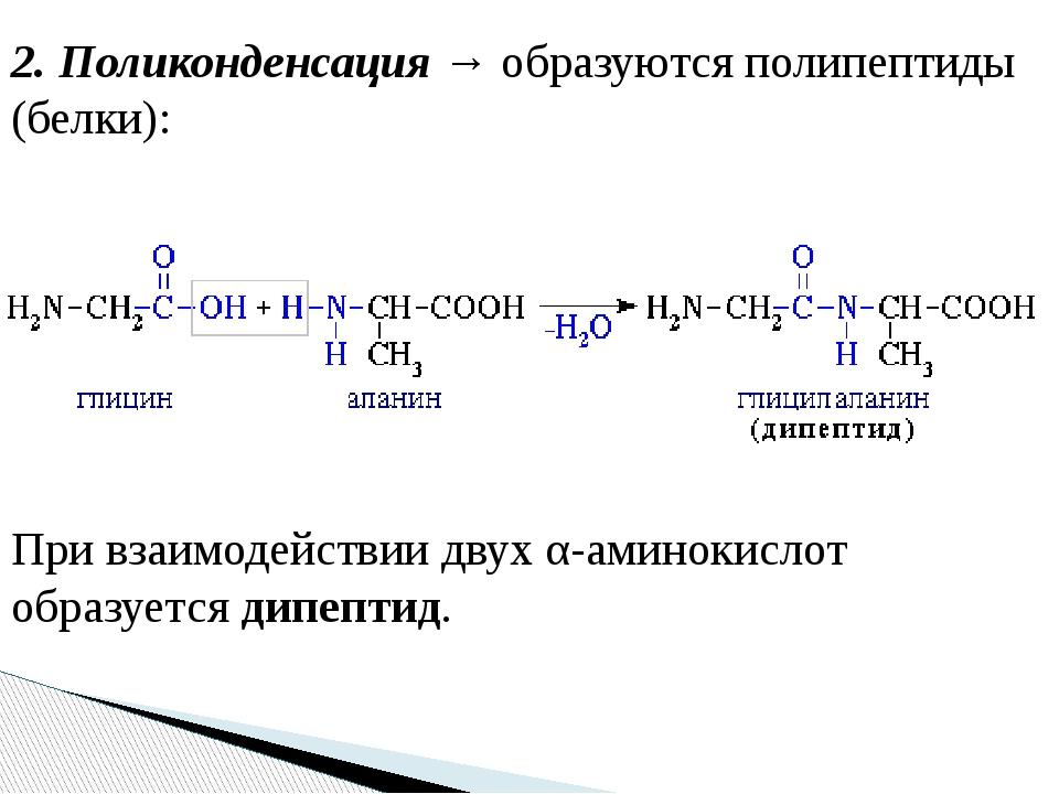 2. Поликонденсация → образуются полипептиды (белки): При взаимодействии двух...