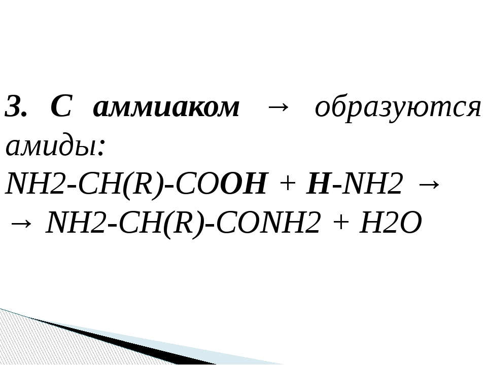 3. С аммиаком → образуются амиды: NH2-CH(R)-COOH + H-NH2 → → NH2-CH(R)-CONH2...