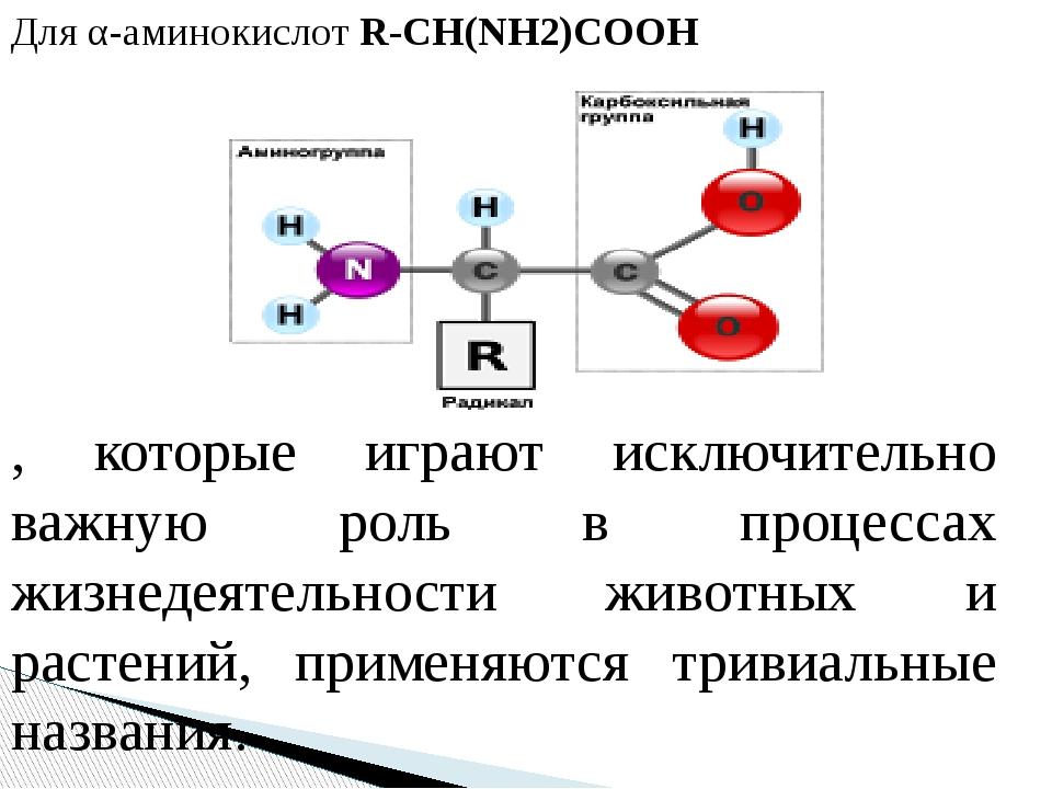 Для α-аминокислот R-CH(NH2)COOH , которые играют исключительно важную роль в...