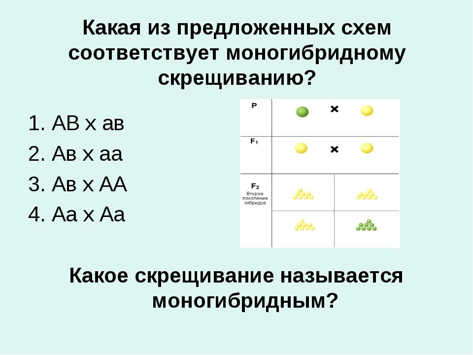 Какая из предложенных схем соответствует моногибридному скрещиванию? 1. АВ х...