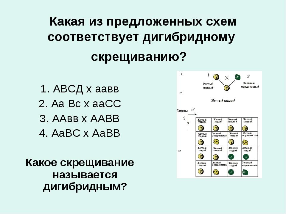 Какая из предложенных схем соответствует дигибридному скрещиванию? 1. АВСД х...