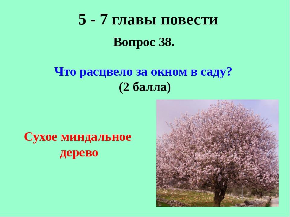 5 - 7 главы повести Вопрос 38. Что расцвело за окном в саду? (2 балла) Сухое...