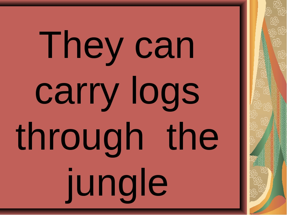 They can carry logs through the jungle