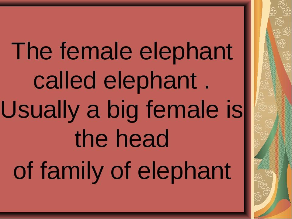 The female elephant called elephant . Usually a big female is the head of fam...