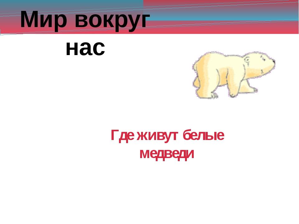 Мир вокруг нас Где живут белые медведи