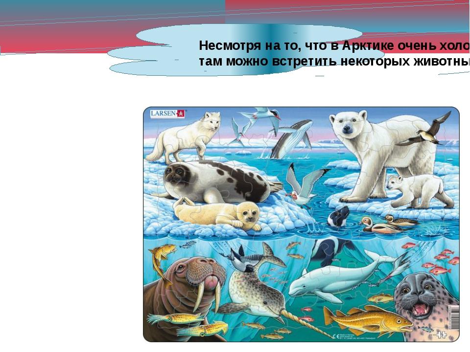 Несмотря на то, что в Арктике очень холодно, там можно встретить некоторых жи...
