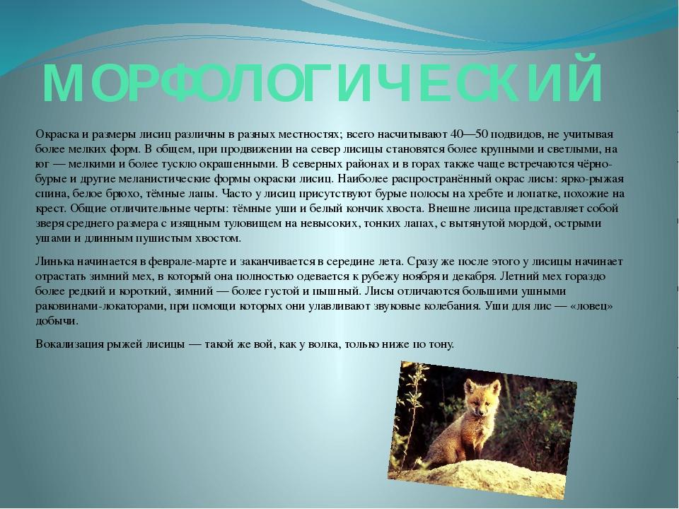 МОРФОЛОГИЧЕСКИЙ Окраска и размеры лисиц различны в разных местностях; всего н...